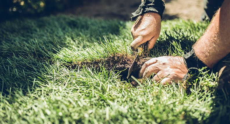 How to lay turf: Top tips for the perfect lawn | Simply Savvy