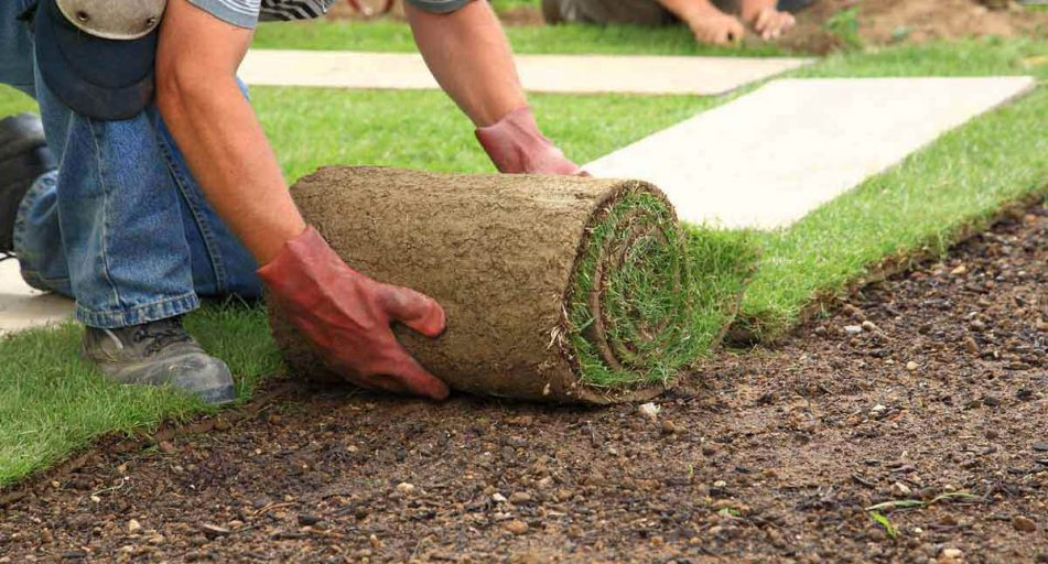 tips for laying turf simply savvy budget direct