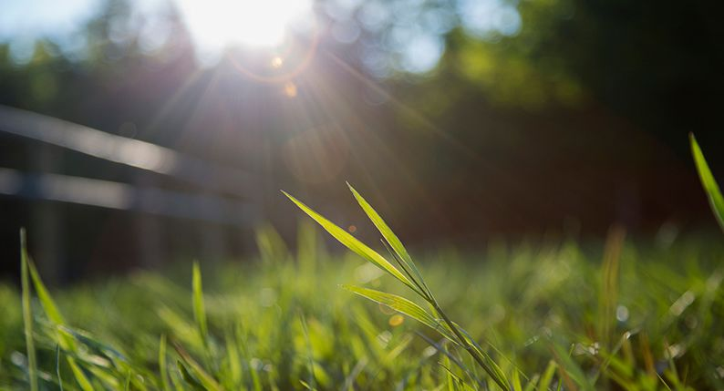 How To Grow Grass From Seed Simply Savvy Budget Direct