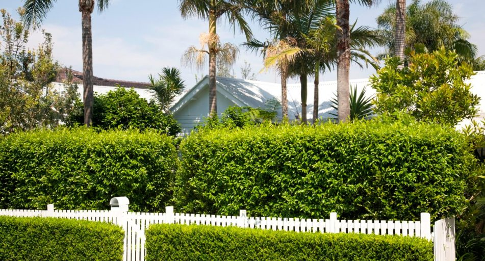privacy and safety barriers for your home fences hedges and gates