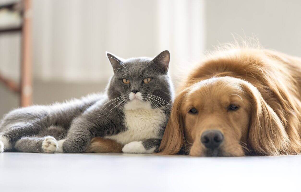 owning a pet Owning a cat or kitten can provide multiple benefits for your health whether you own a friendly lap cat or a quiet introvert, the sense of companionship and.