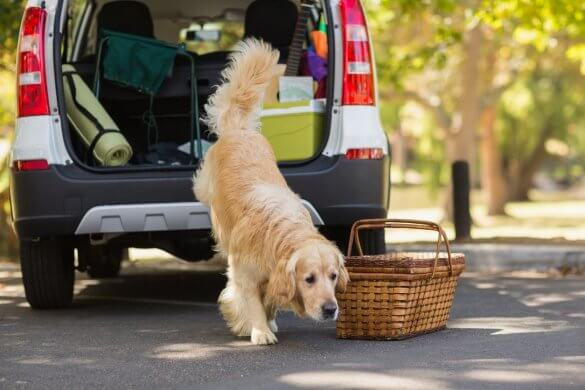 Travelling with pets: The complete guide – Simply Savvy | Budget Direct