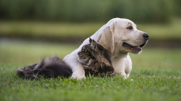 Tips For Naming Your Pets Insurance Solved Blog Budget Direct