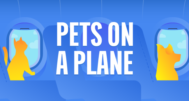Top 50 Pet Friendly Airlines In The World Insurance Solved Blog Budget Direct