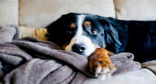 Dog Diarrhoea (2) (1)