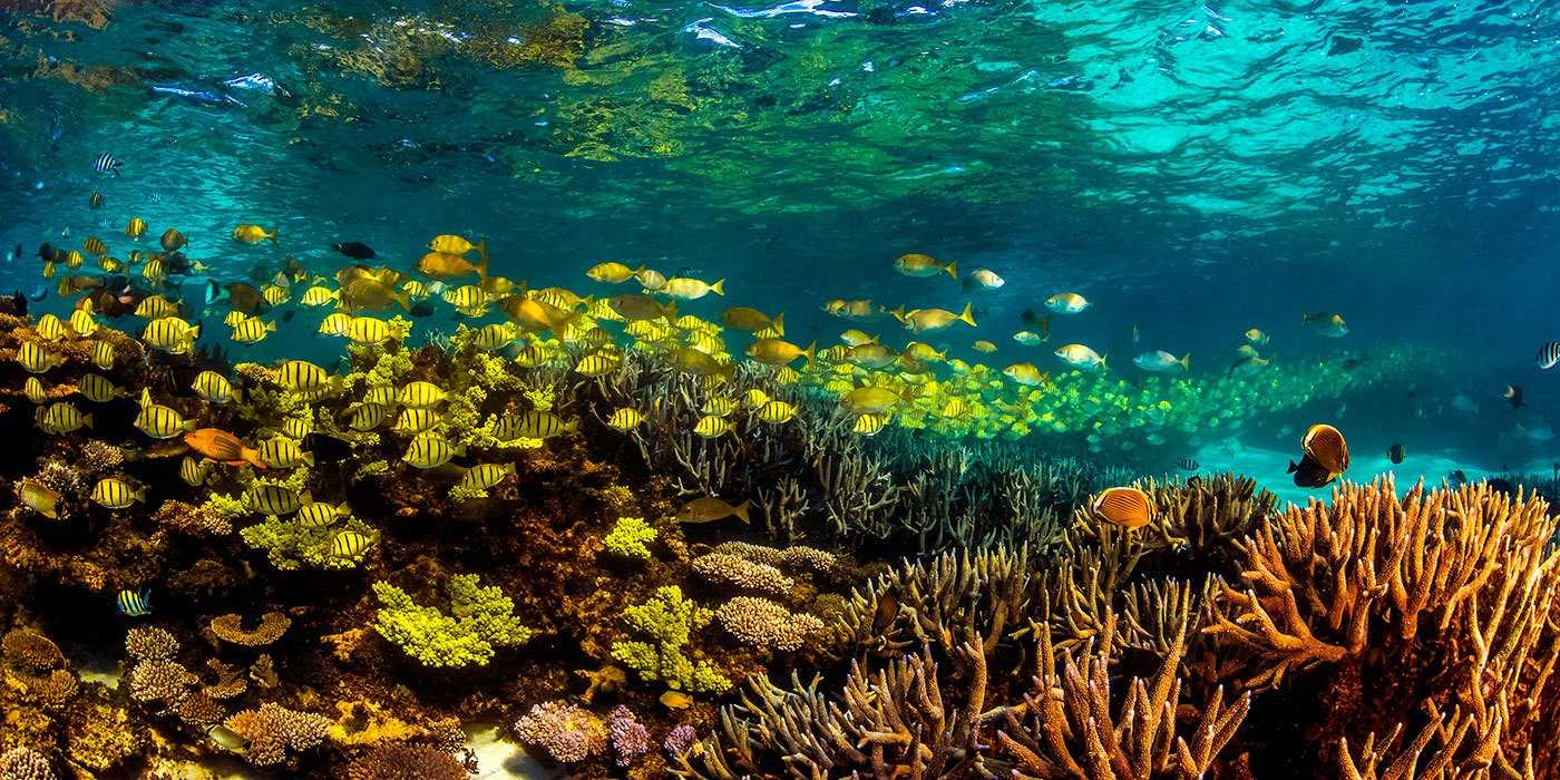 The Ningaloo Reef Travel The World Without Leaving Australia
